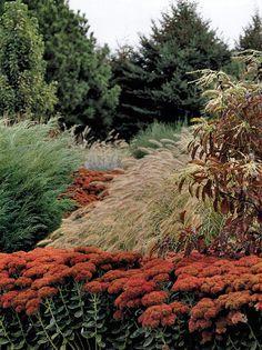 sedums and grasses.
