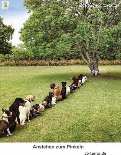 Hunde stehen zum Pinkeln am Baum an
