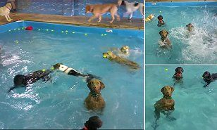 In a recent video uploaded to Facebook by Virginia-based doggy daycare Happy Tails Resort, the cute pooch, named Beja, is completely unaffected by the splashing and fun happening around her.