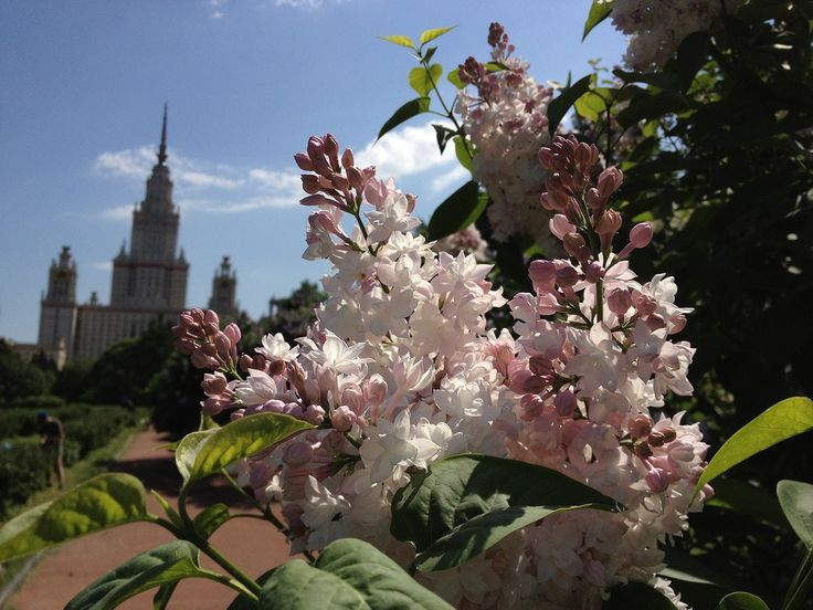 ботанический сад МГУ - Поиск в Google