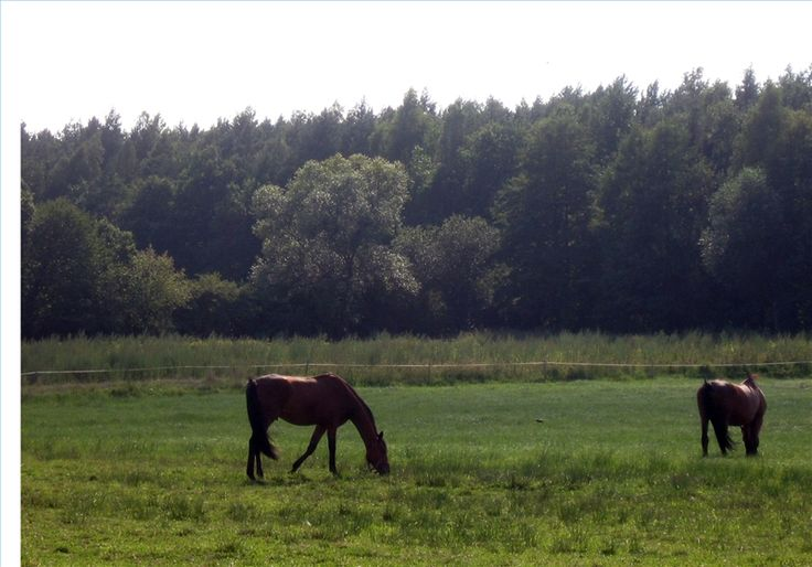 How to Start a Non-Profit Horse Rescue