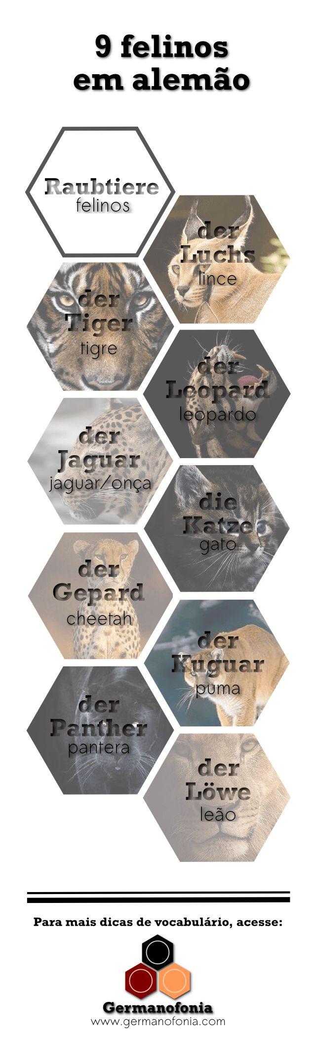 felinos em alemão