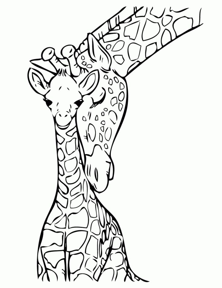 17 best ideas about giraffe drawing on pinterest