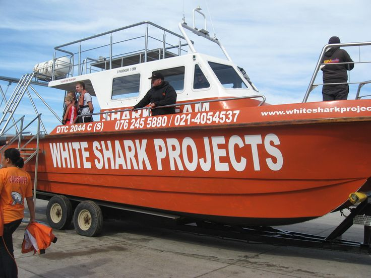 Guests are loving their shark caged diving with White Shark Projects.