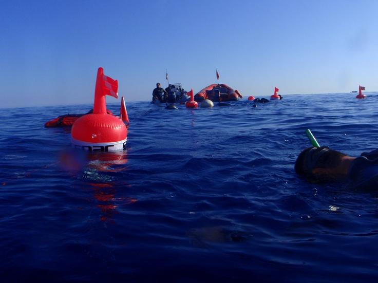 FIAS e l'Apnea Avanzata con Armando Lombardi e SEAC Sub  http://www.seacsub.com/press.php?ID==3#
