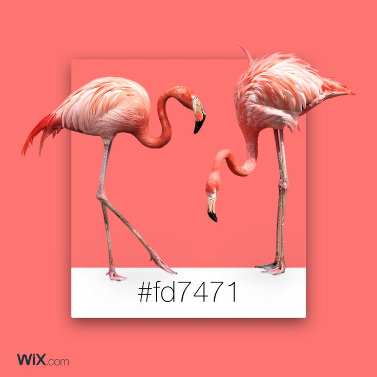 Color Palette Inspiration | Wild Flamingo Pink