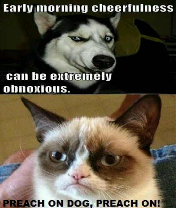 Funny Cat Sayings Quotes: 1929 Best Grumpy Cat Makes Me Laugh Images On Pinterest