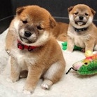 Live Cams (Pets & Animals)  Featured now is the Puppy Cam :)