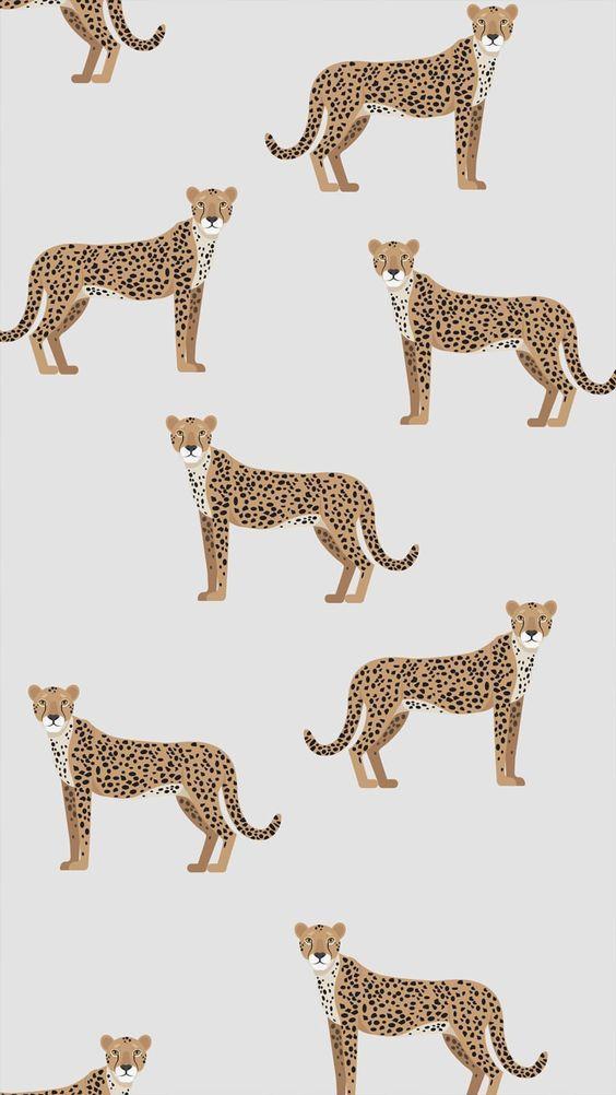 Des léopards sur nos murs… Quand on vous dit que le papier peint fait tout ! …