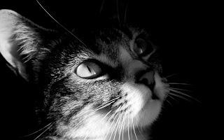 Kat in schaduw