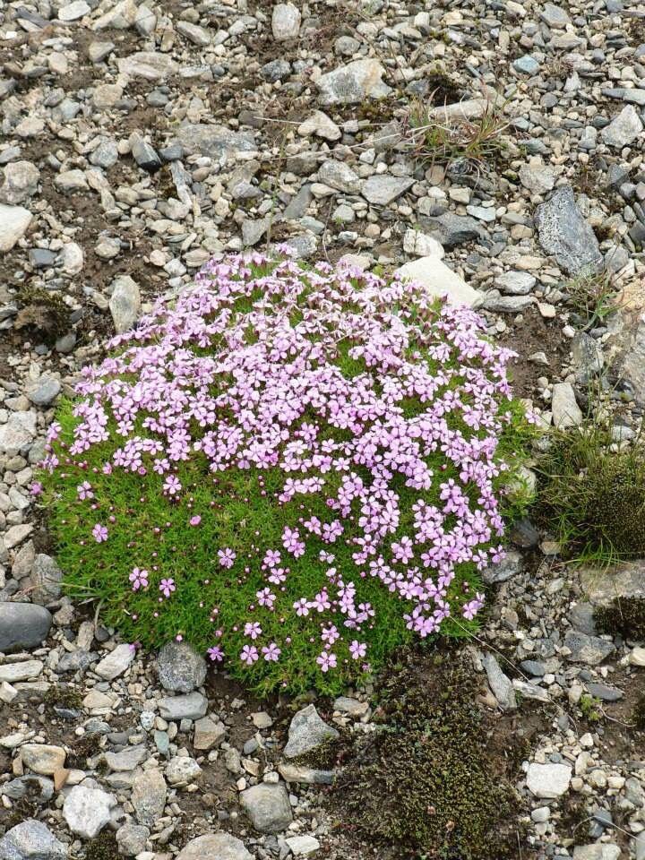 Flower at top of Väliste