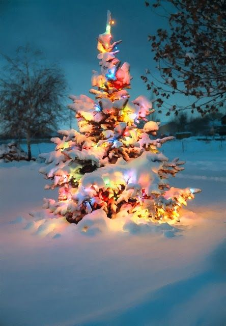 Beautiful Christmas Tree outside. I love seeing lit up evergreens with the lights shimmering off freshly fallen snow