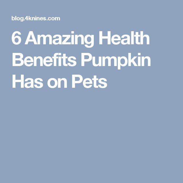 6 Amazing Health Benefits Pumpkin Has on Pets