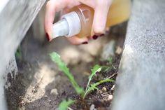 Egy közismert dologgal permetezte be a növényeket. Erről neked is tudnod kell! - Tudasfaja.com