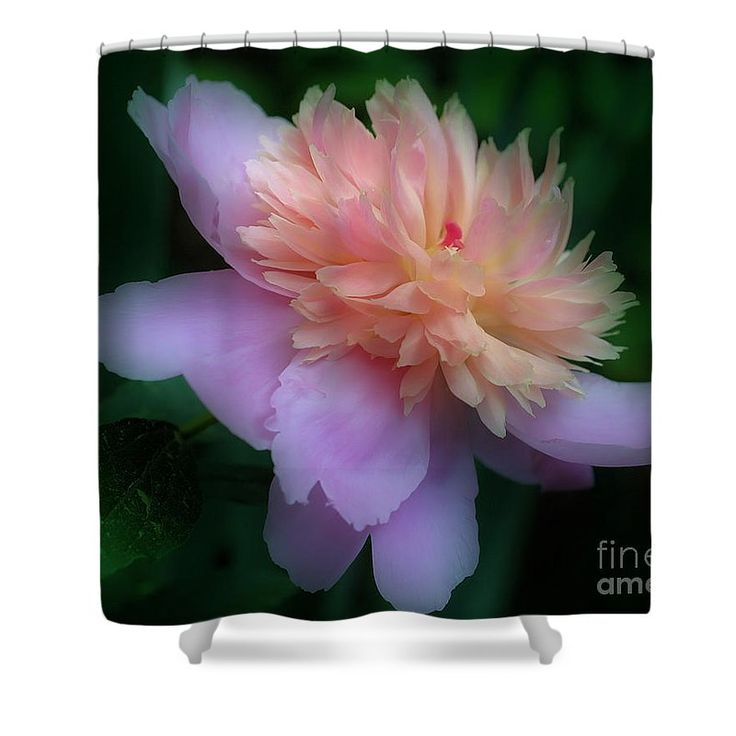 Stunning pink peony flower shower curtain photography by Nature inspired shower curtains