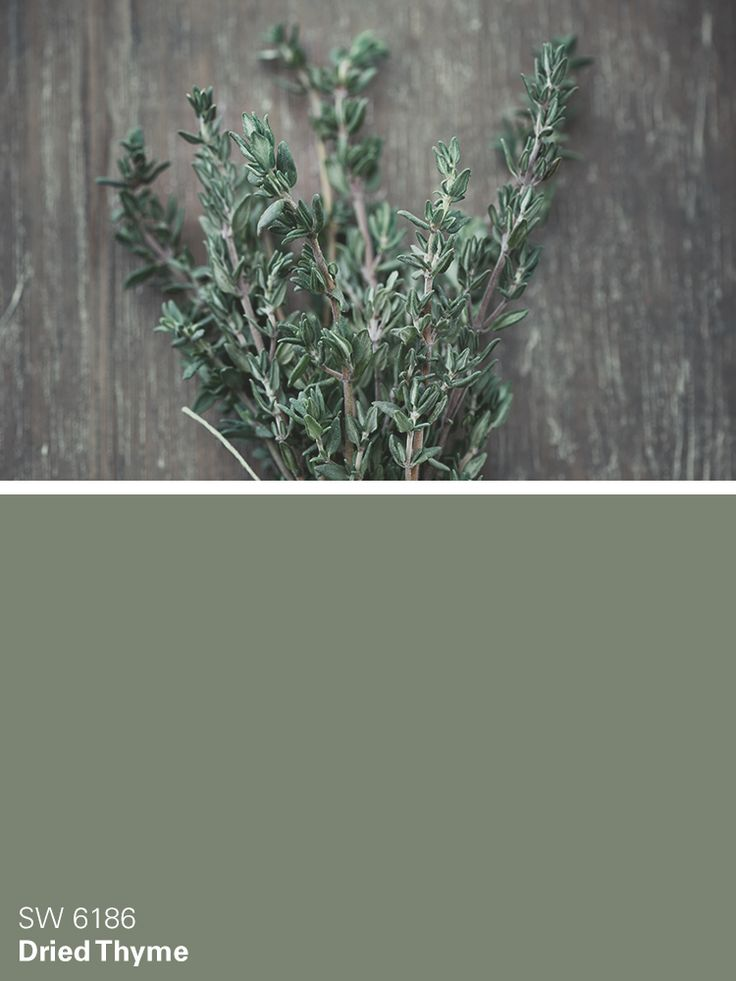 Sherwin-Williams green paint color – Dried Thyme (SW 6186)