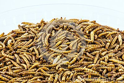A background of a closeup of dried meal worms