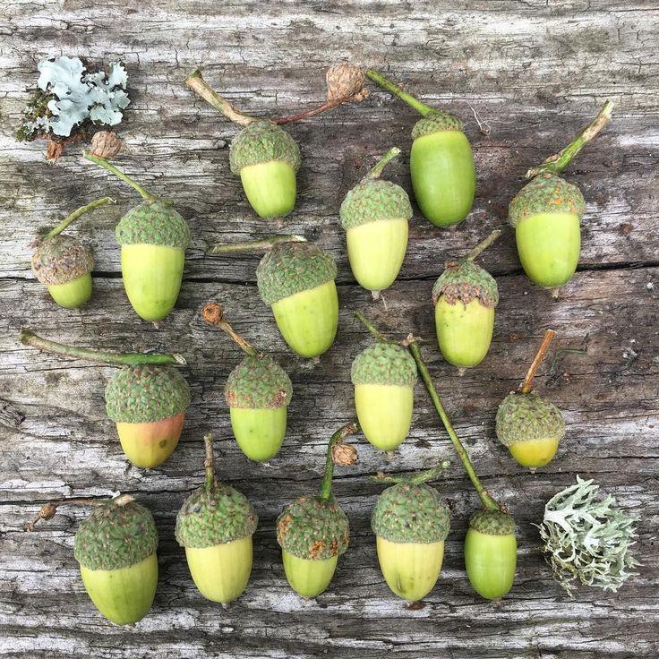 1,628 отметок «Нравится», 29 комментариев — Sian from fforest (@coldatnight) в Instagram: «I am a bit late welcoming September 🌳 Tall oaks from little acorns grow. 🍃🍂 #greatthings…»
