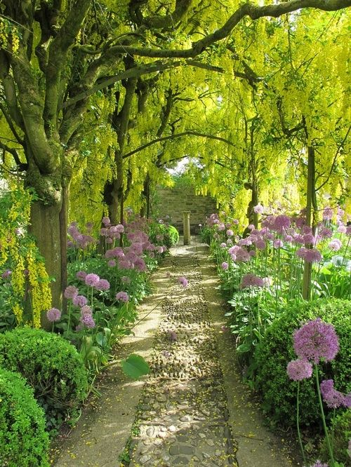 Solemn path with alliums