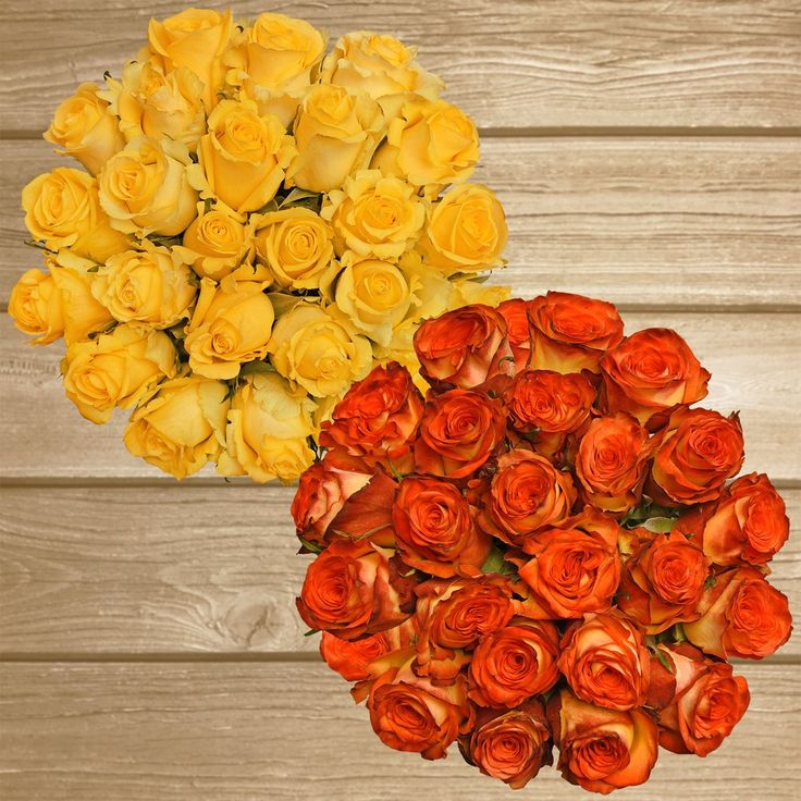 Rose Duo Yellow and Bicolor Yellow Red-  EbloomsDirect #roses #Promo #Flowers #wedding #events #bouquets #arrangement #party #fall #winter #summer #spring #harvest #Christmas #garden #centerpieces #autumn #tropicalflowers #recipe #decor #bridal #floral #DIY #gift #online #valentines #bride #ideas #blooms #anniversary #mothersday #baby #gardening #plants #holidays #fashion #home #decor #USA #Costco, #art #Texas #design #Sams #bulk #fiftyflowers #style #shopping