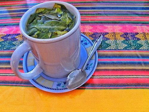 Coca tea in Peru used to fight altitude sickness