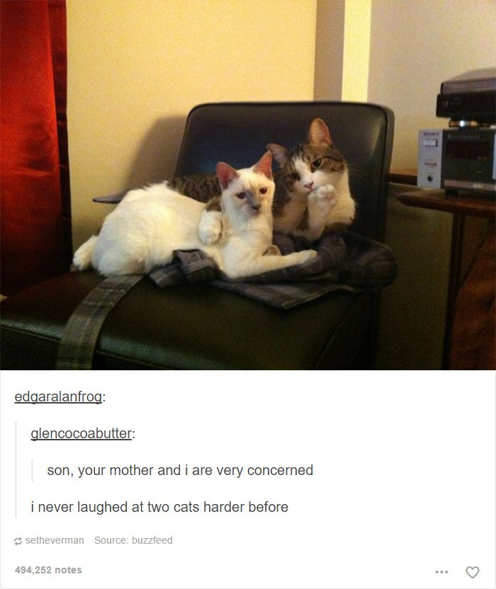 Best Silly Catz Images On Pinterest A Professional - 20 cat posts on tumblr that are impossible not to laugh at