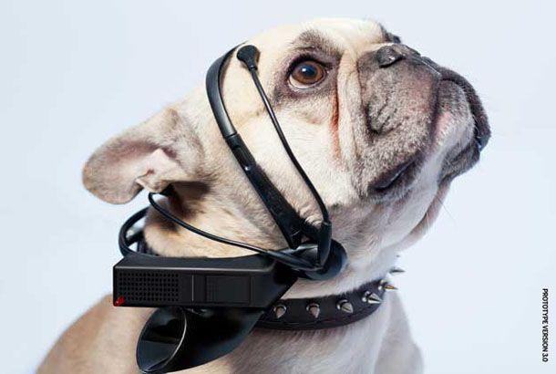 犬の気持ちを「人間の言葉」に翻訳するヘッドセット   roomie(ルーミー)