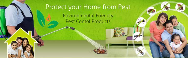Mourier pest control services, a renowned name in the business which provides solutions for all kinds of pests existing inside your home.
