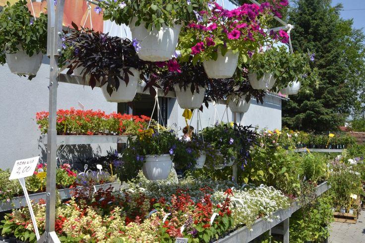 Rośliny balkonowe, byliny i zioła