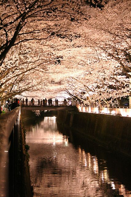 Trees over the water #nightCherries Blossoms, Art Photography, Night Lights, Fashion Capitals, Places, Blushes Colors, Beautiful Art, Kyoto Japan, Cherry Blossoms