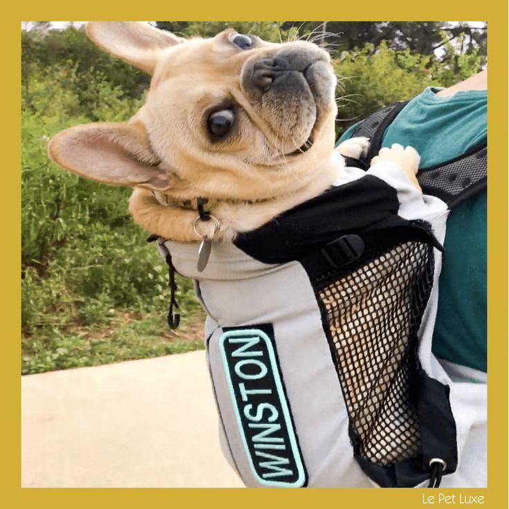 K9 Sport Sack® Air Dog backpack carrier, Pet backpack
