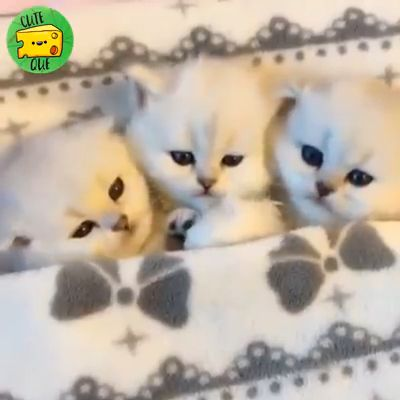 Cute kittens Nap time