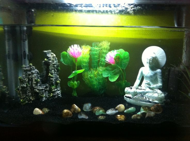 17 best images about aquarium on pinterest water lilies for Zen fish tank