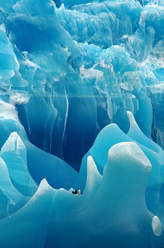 Gentoo & Chinstrap Penguins on the sculptural form of an ancient blue iceberg. Antarctica.