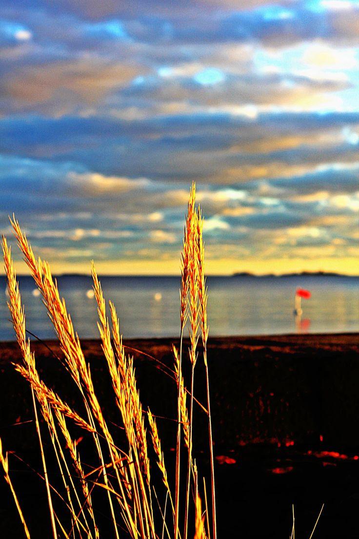 merellinen vilja