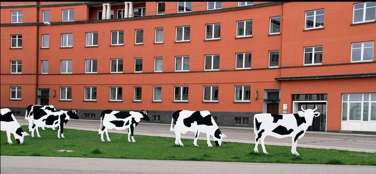 Gefleckte Kühe am Willy-Brandt-Platz in Ulm