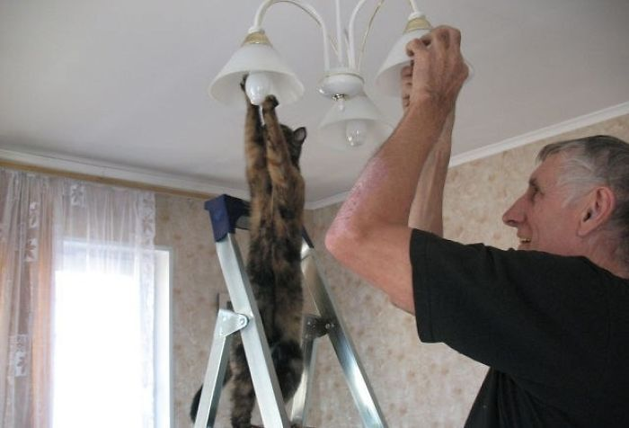 How Many Cats Does It Take To Change A Light Bulb?