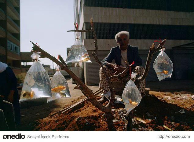 Bir ağacın dallarına astığı plastik torbaların içindeki Japon balıklarını satmaya çalışan adam. Beyrut, Lübnan. Şubat, 1983.