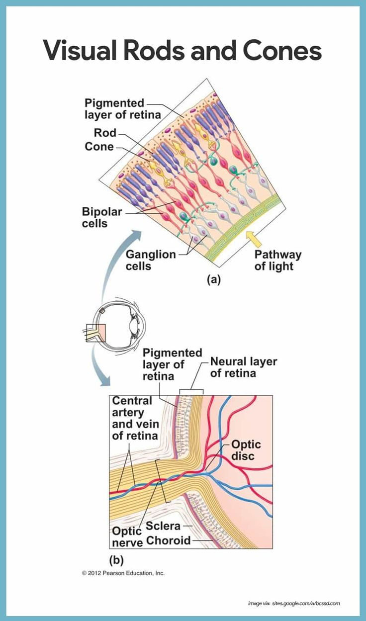 8 best Special sense images on Pinterest   Anatomy and physiology ...