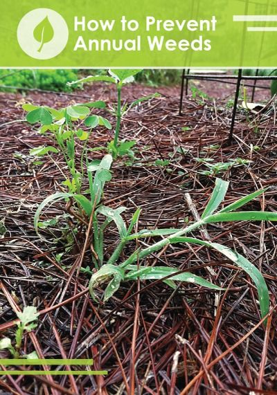how to get rid of crabgrass and weeds