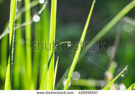 A dew drop with glitter on the grass