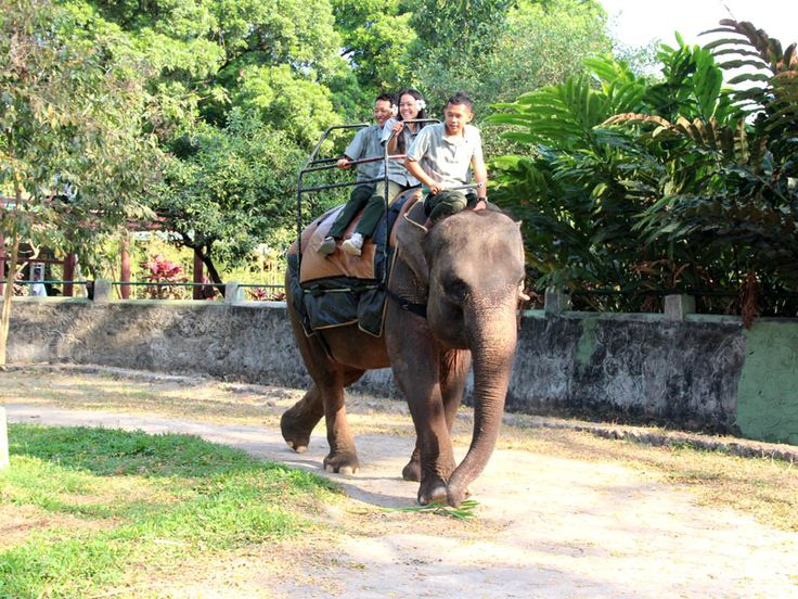 Gajah Tunggang