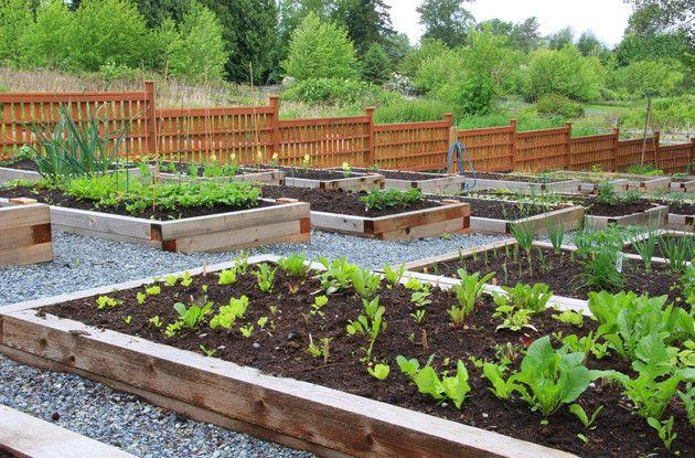 Faça uma horta em casa: 7 passos para preparar um canteiro