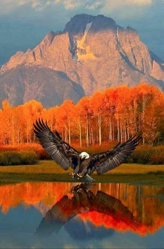 A Natureza é fascinante