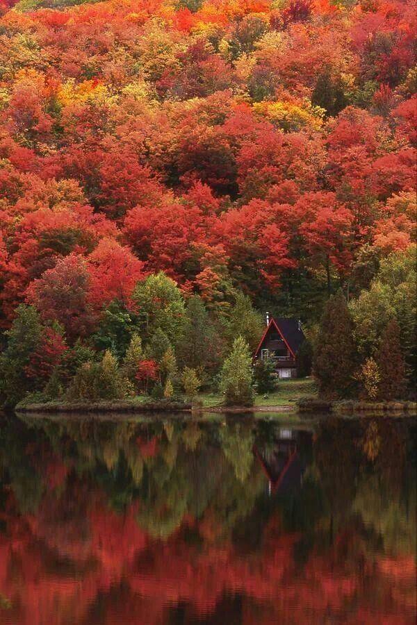 Québec, les forêts, les lacs, les splendides couleurs des Séquoïas...   (magnifique en période été indien... mi octobre) : explosion de couleurs d'automne - juste mémorable | #québec #automne
