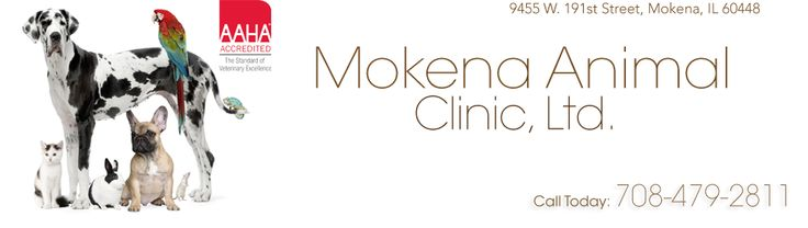 If you live in Illinois, then you have picked the perfect site to find a high quality vet. The Doctors at Mokena Animal Clinic are licensed veterinarians for treating dogs, cats, birds, and other pets. Your pet's health and well being is their top priority and they will take every step to give your pet the best possible care.
