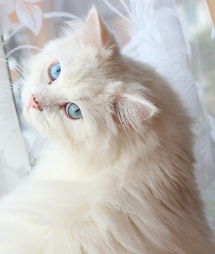 cefd827dfc8ad086ce182a8728dcb1a3--cat-cat-kitty-cats.jpg