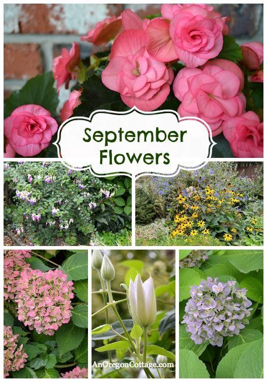 Beautiful September Flowers