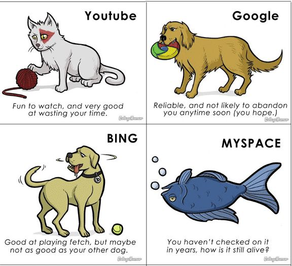 if websites were pets