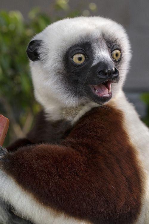17 Best images about Lemur Walk on Pinterest   Madagascar ...